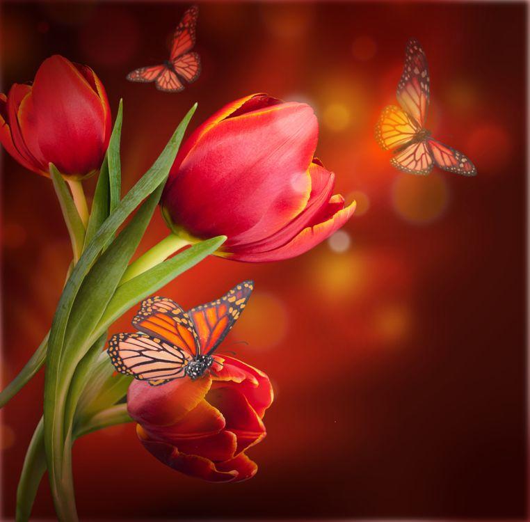 Фото бесплатно тюльпаны, бабочки, цветы, флора, цветы