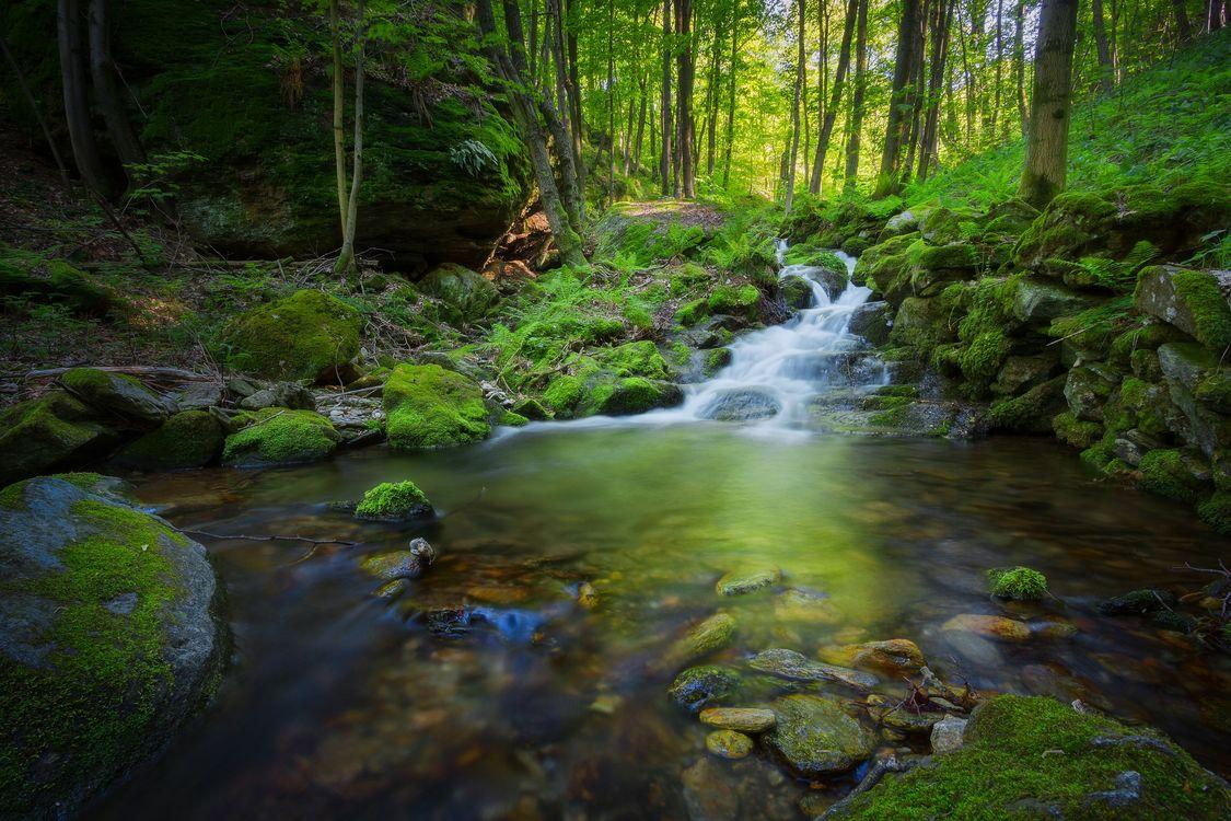 Фото бесплатно водопад, лес, деревья, речка, водоём, камни, природа, пейзаж, природа