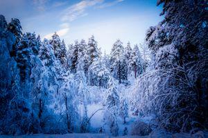 Фото бесплатно зимний лес, зима, снег