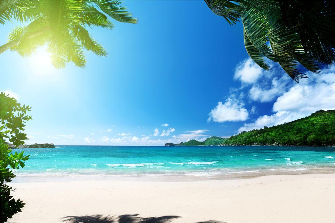 Фото бесплатно пляж, океан, пальмы, рай, море, лето, солнце - на рабочий стол