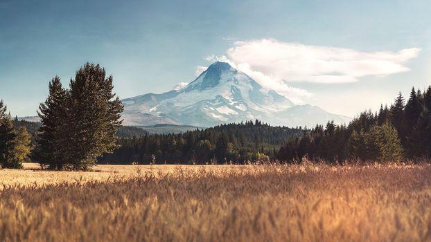 Фото бесплатно осеннее поле, лесной массив, гора