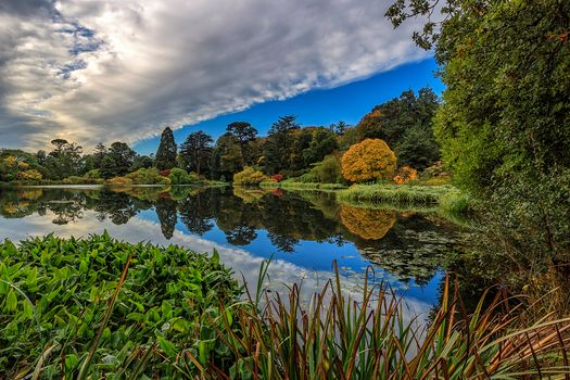 Photo free trees, autumn, northern ireland