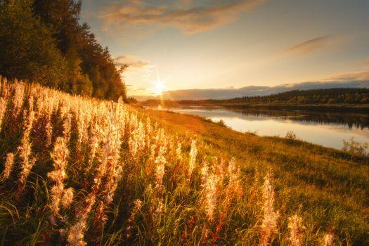 Сибирское золото · бесплатное фото