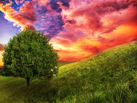 Photo free sunset, slope, tree