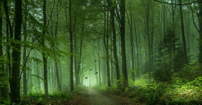Заставки зелёный, лес, дорога