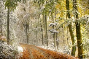 Фото бесплатно лес, пейзаж, осень
