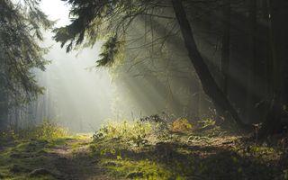 Фото бесплатно лес, пейзаж, природа, дерево, деревья