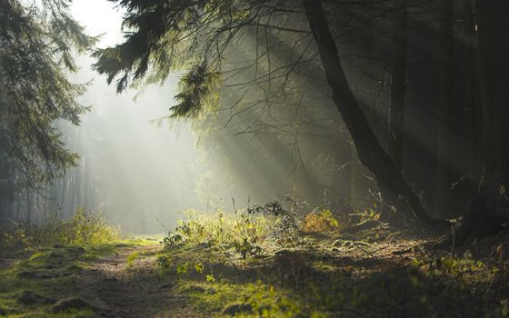 Photo free forest, landscape, nature
