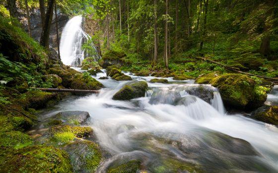 Заставки леса, пейзажи, природа