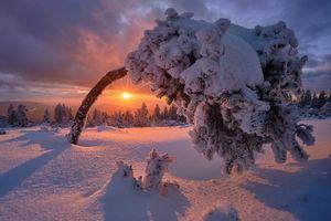 Бесплатные фото Германия,Шварцвальд,закат,зима,снег,деревья,сугробы