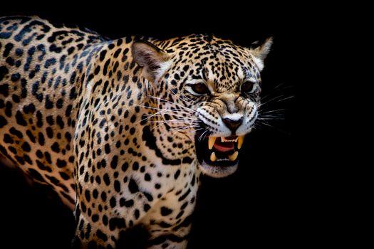 Фото леопард, леопард портрет онлайн бесплатно