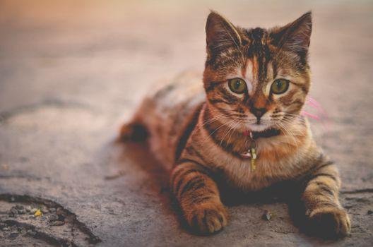Котенок - очаровательный с ошейником