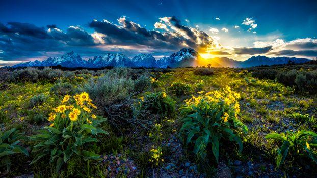 Фото бесплатно цветы, национальный парк Гранд-Титон, закат