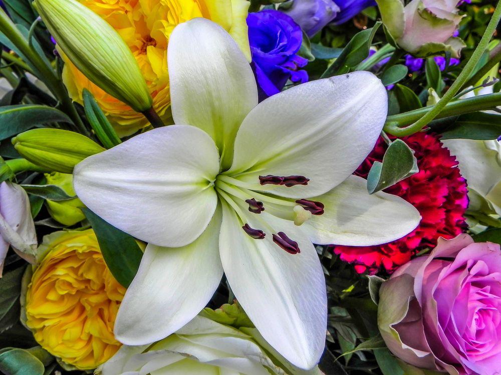 Фото бесплатно лилия, букет, цветы, флора, цветы