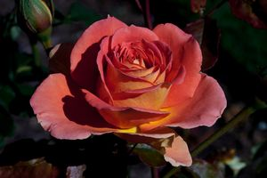 Заставки цветок, цветы, цветение