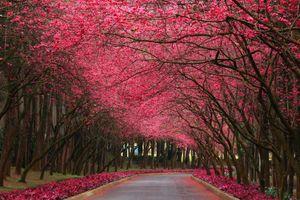 Фото бесплатно цветы, лес, дорога