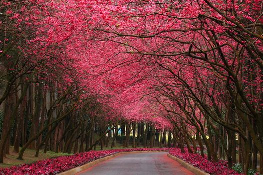 Photo free flowers, forest, road