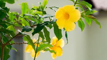 Бесплатные фото цветок,природа,флора,красивая,цвет,цветение,цвести