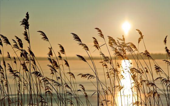 Фото бесплатно туман, трава, озеро