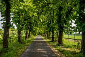 Бесплатные фото дорога,деревья,аллея,поле,природа,пейзаж