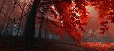 Заставки лес, панорама, природа