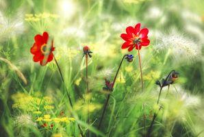 Бесплатные фото поле,цветы,трава,растения,флора,макро,природа