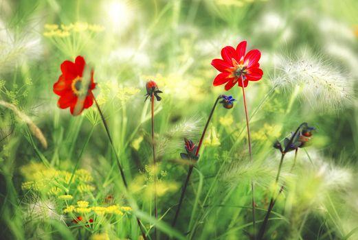 Заставки поле,цветы,трава,растения,флора,макро,природа
