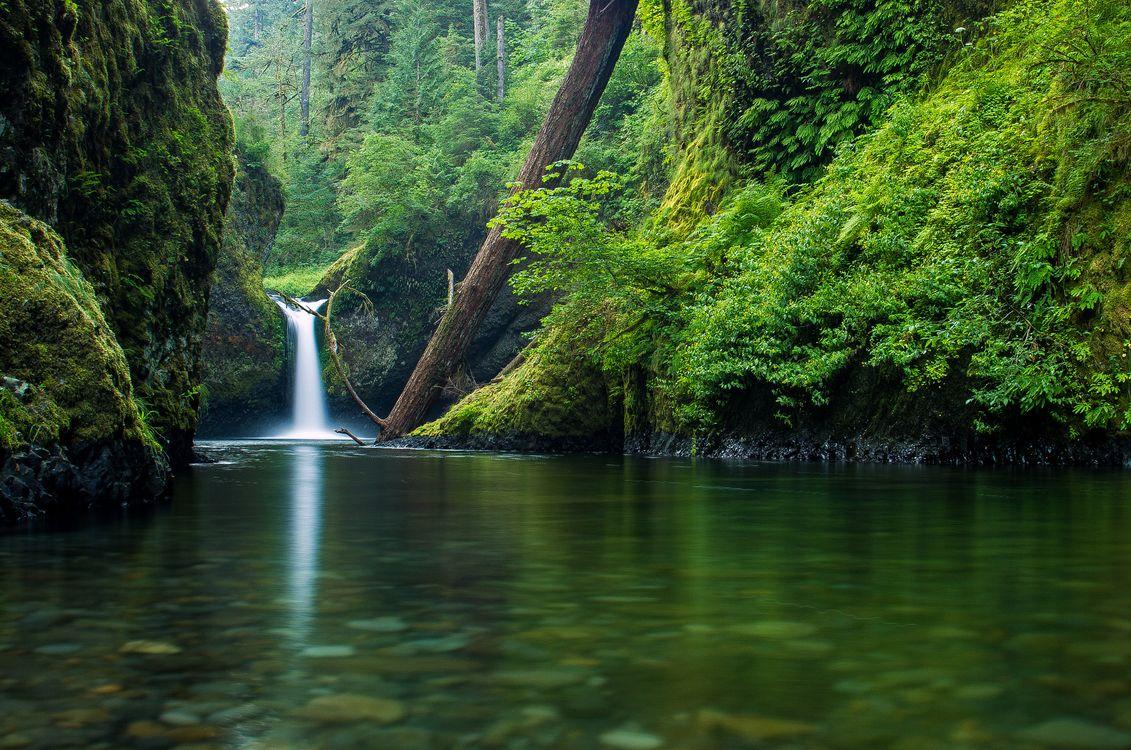 Фото Punch Bowl Falls Columbia River Gorge водопад - бесплатные картинки на Fonwall