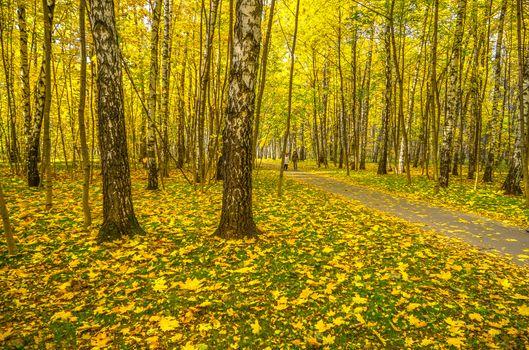 Заставки Бирюлёвский лесопарк,Москва,Россия,осень,краски осени,осенние листья,парк,деревья,природа,пейзаж,осень в Москве