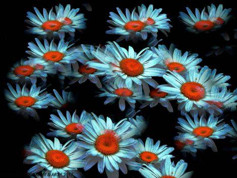 Бесплатные фото цветы,ромашки,цветочная композиция,art