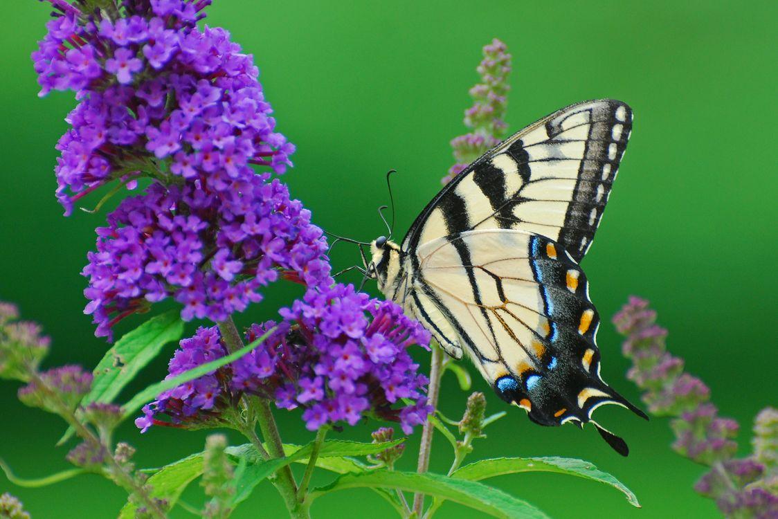 Скачать бабочку · бесплатная заставка