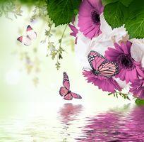 Фото бесплатно бабочка, цветы, цветение