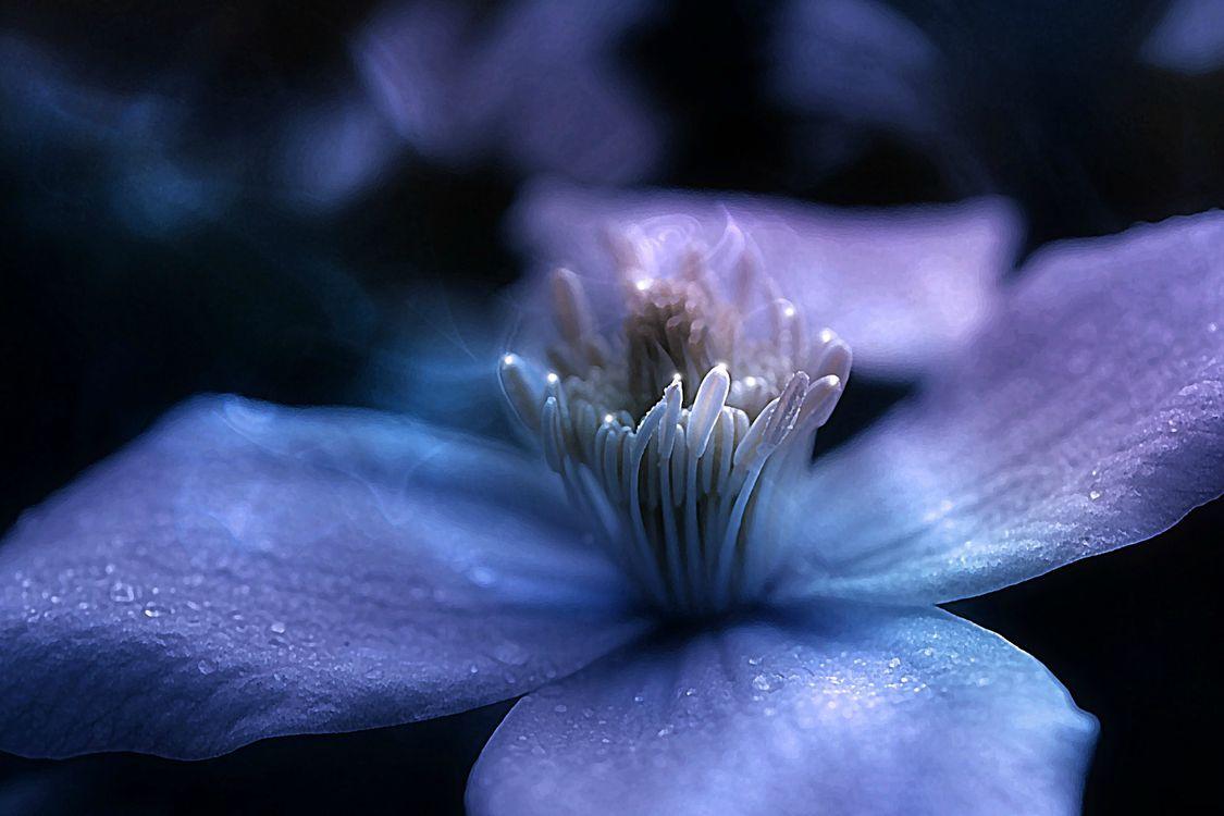 Фото бесплатно растения, флора, растение - на рабочий стол
