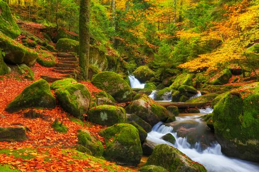 Photo free Fall above the German Black Forest, autumn, forest