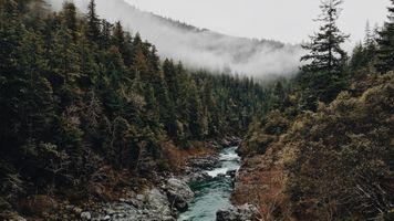 Бесплатные фото лес,туман,природа,деревья,вода