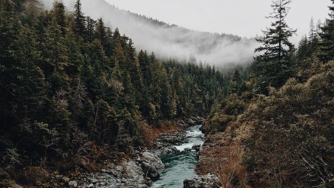 Фото бесплатно лес, туман, природа, деревья, вода, пейзажи