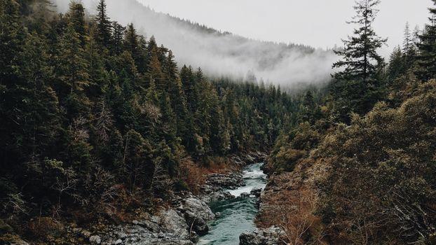 Заставки лес,туман,природа,деревья,вода
