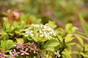 Бесплатные фото маленькие цветы,растение,цветок,флора,весна
