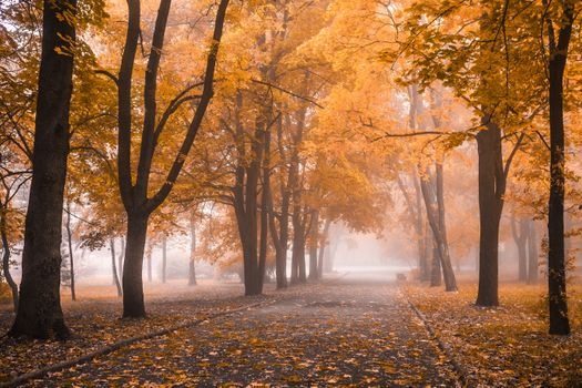 Misty morning in autumn park · free photo