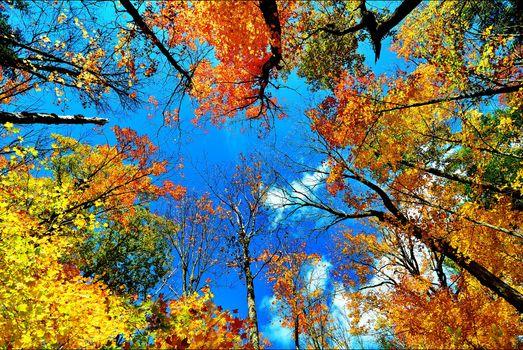 Photo free sky, autumn colors, landscape