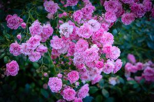 Photo free flower, flora, bloom