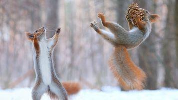Photo free squirrel, pinecone, snow