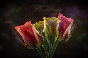 Фото бесплатно цветок, букет, тюльпаны
