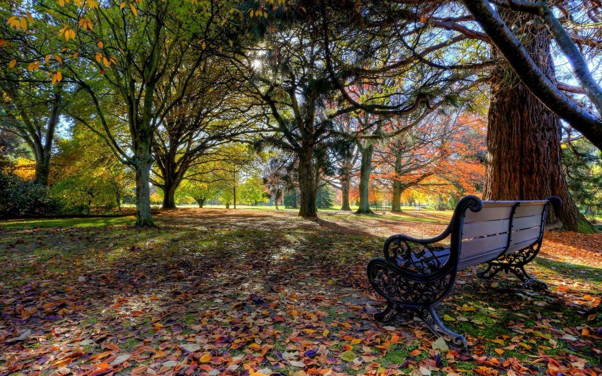 Фото бесплатно парк, скамья, скамейка - на рабочий стол
