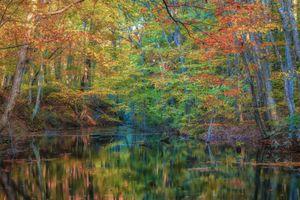 Бесплатные фото лес,деревья,камни,речка,река,осень,природа