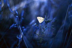 Цветы и бабочка