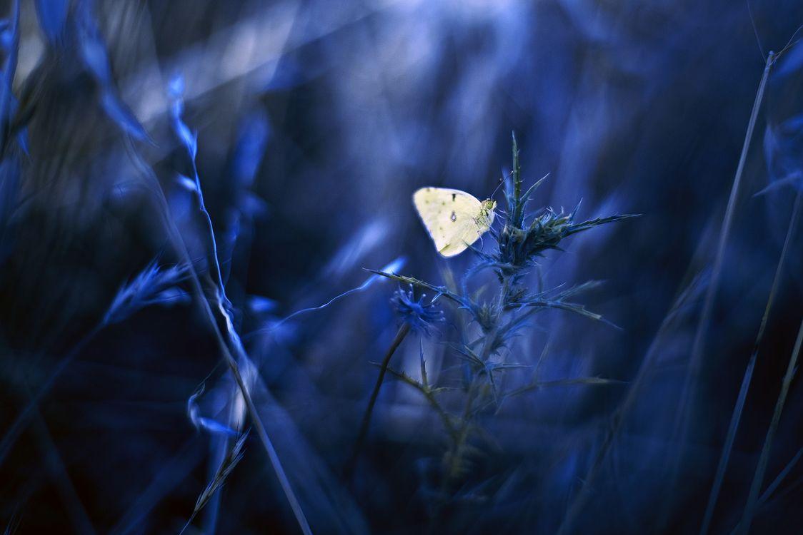 Цветы и бабочка · бесплатное фото
