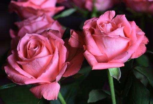 Букет розовых роз · бесплатное фото