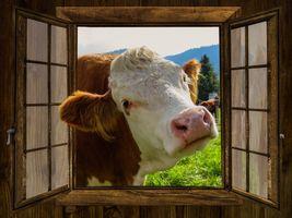 Фото бесплатно ферма, луг, окно