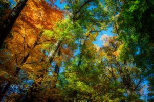 Фото бесплатно верхушки, деревьев, кроны, осень, осенние краски, краски осени, небо, деревья, листья, природа